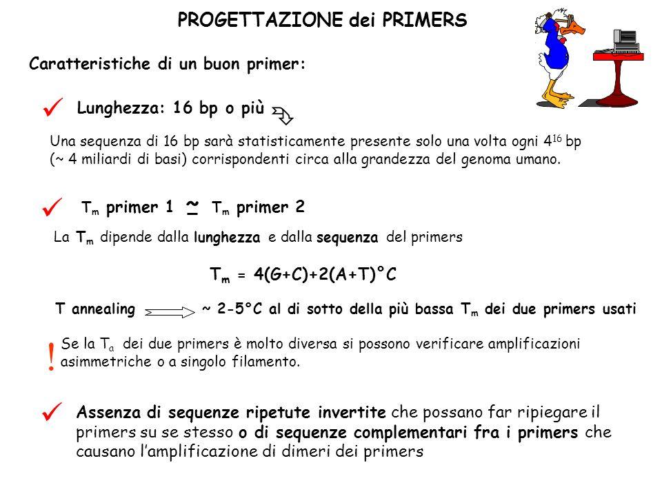      ~ PROGETTAZIONE dei PRIMERS