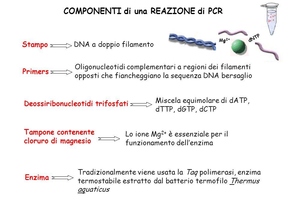 COMPONENTI di una REAZIONE di PCR