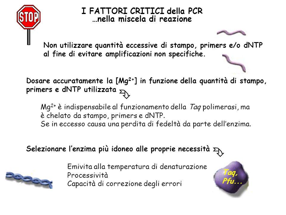 I FATTORI CRITICI della PCR …nella miscela di reazione