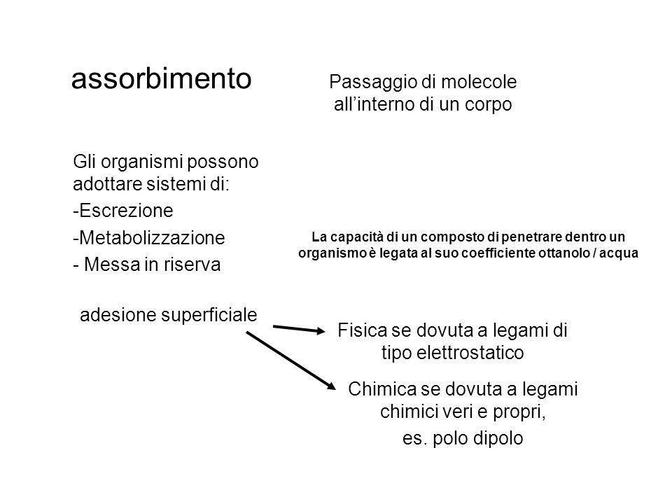 assorbimento Passaggio di molecole all'interno di un corpo