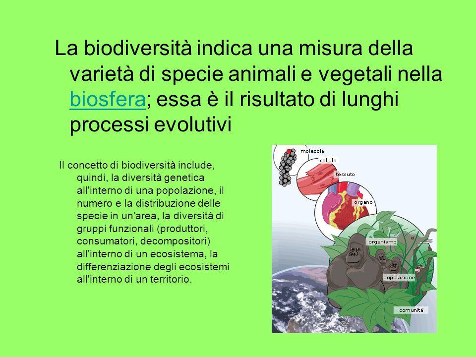 La biodiversità indica una misura della varietà di specie animali e vegetali nella biosfera; essa è il risultato di lunghi processi evolutivi