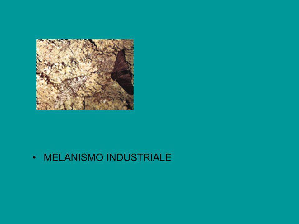 MELANISMO INDUSTRIALE