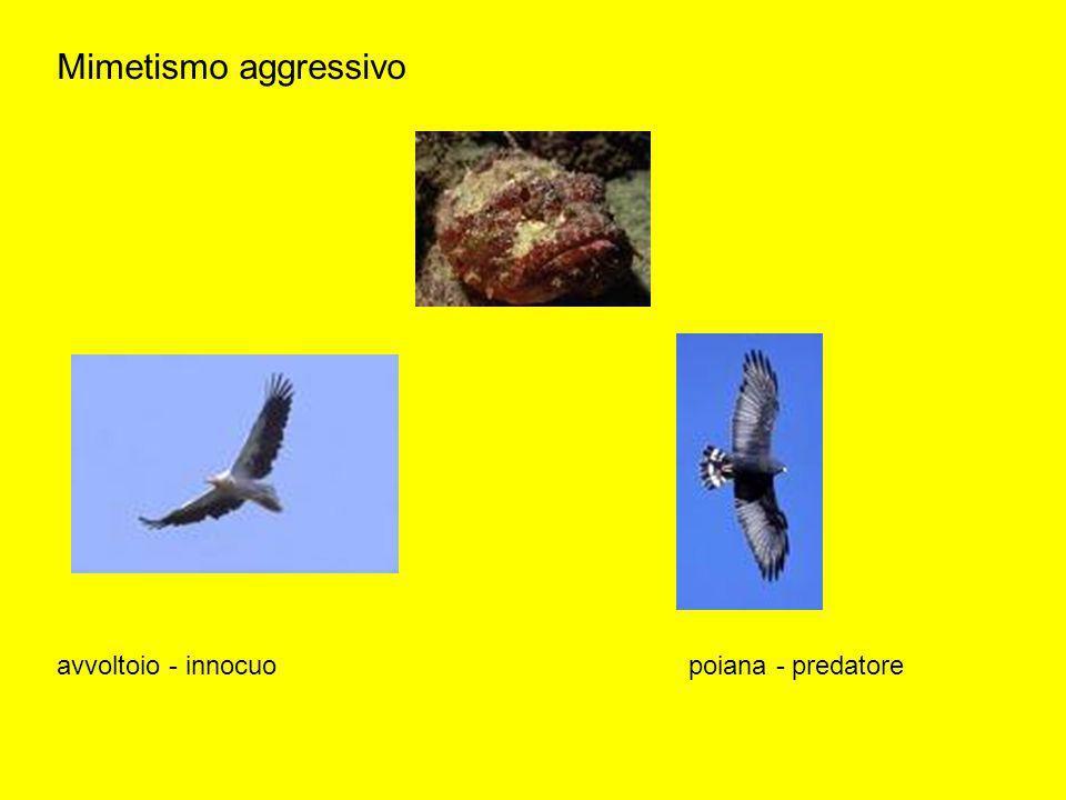 Mimetismo aggressivo avvoltoio - innocuo poiana - predatore