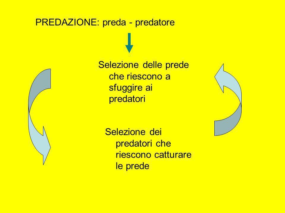 PREDAZIONE: preda - predatore