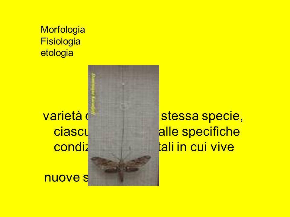 Morfologia Fisiologia. etologia. varietà diverse della stessa specie, ciascuna adattata alle specifiche condizioni ambientali in cui vive.