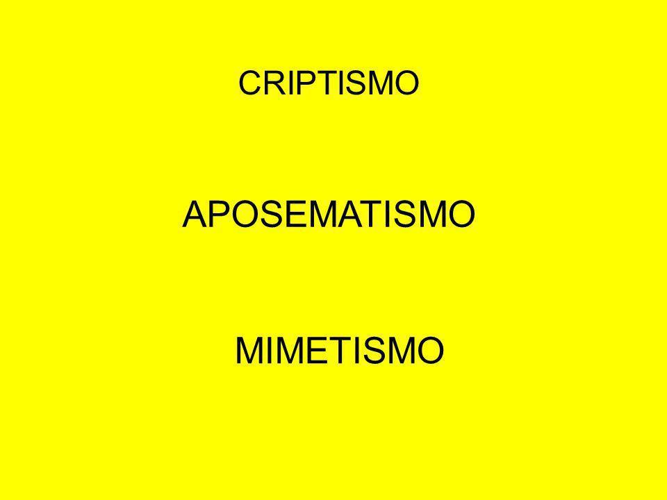 CRIPTISMO APOSEMATISMO MIMETISMO