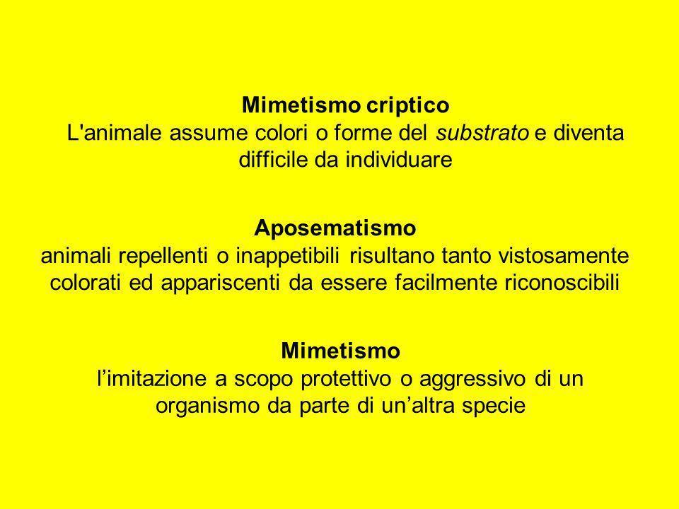 Mimetismo criptico L animale assume colori o forme del substrato e diventa difficile da individuare