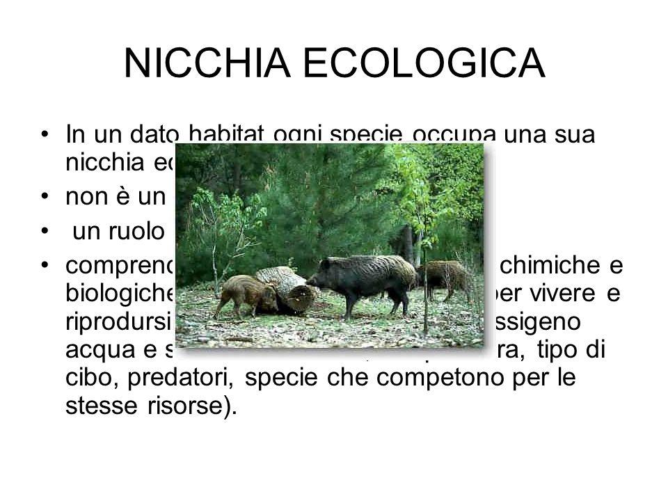 NICCHIA ECOLOGICA In un dato habitat ogni specie occupa una sua nicchia ecologica, non è un luogo ma un modo di vita,