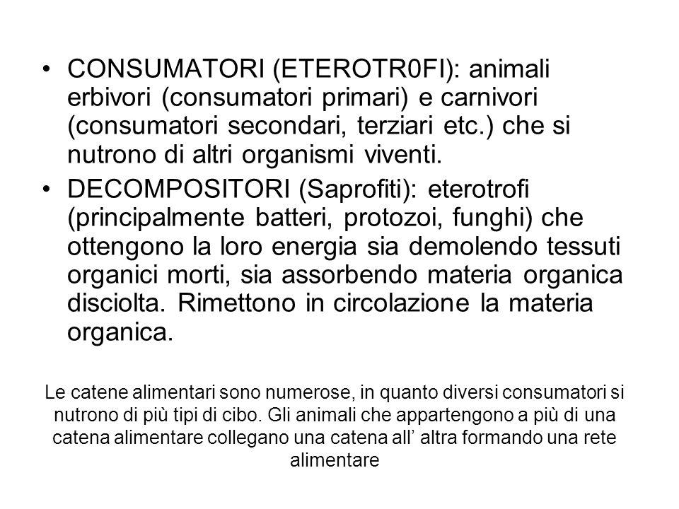 CONSUMATORI (ETEROTR0FI): animali erbivori (consumatori primari) e carnivori (consumatori secondari, terziari etc.) che si nutrono di altri organismi viventi.