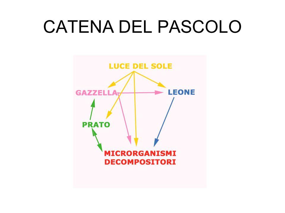 CATENA DEL PASCOLO