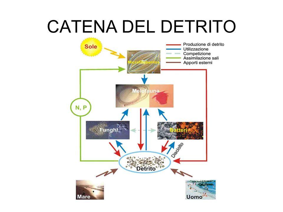 CATENA DEL DETRITO