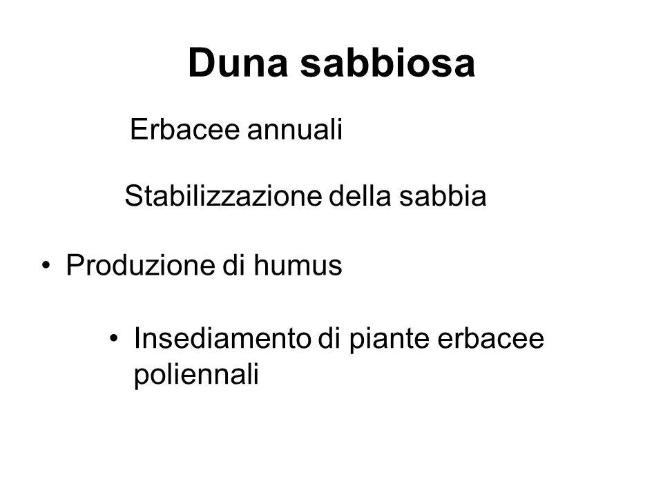Duna sabbiosa Erbacee annuali Stabilizzazione della sabbia