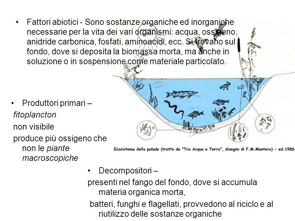 Fattori abiotici - Sono sostanze organiche ed inorganiche necessarie per la vita dei vari organismi: acqua, ossigeno, anidride carbonica, fosfati, aminoacidi, ecc. Si trovano sul fondo, dove si deposita la biomassa morta, ma anche in soluzione o in sospensione come materiale particolato.