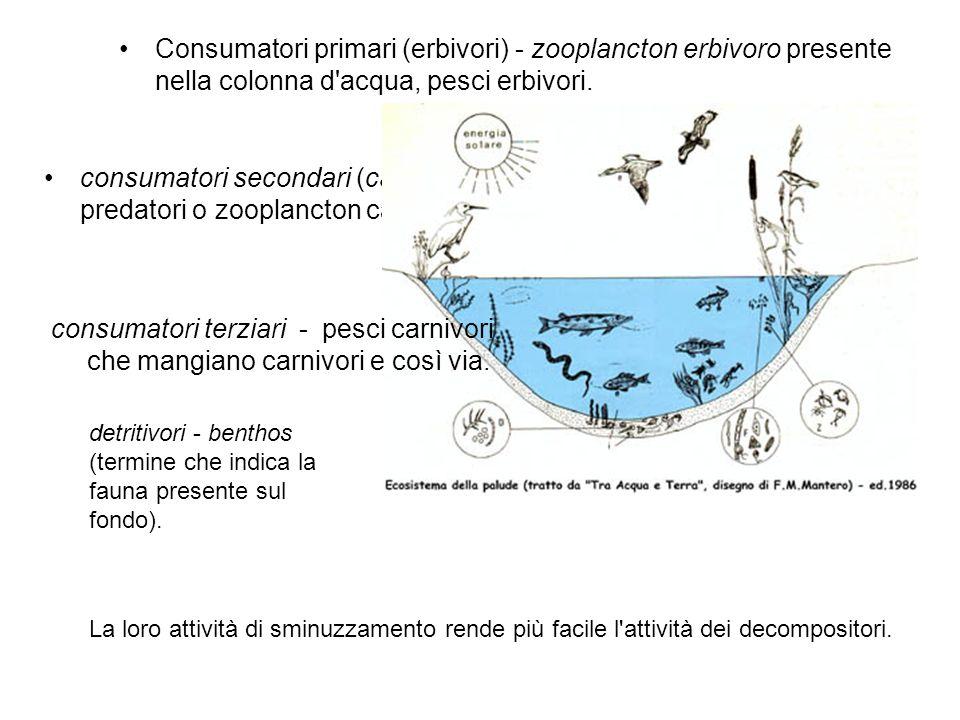 Consumatori primari (erbivori) - zooplancton erbivoro presente nella colonna d acqua, pesci erbivori.