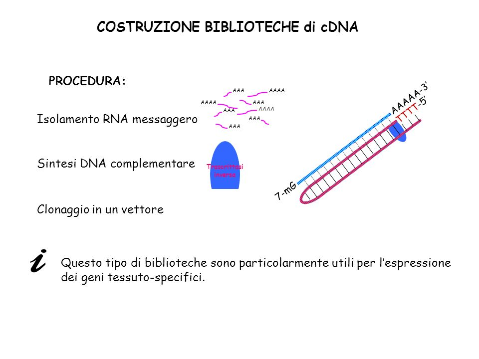 COSTRUZIONE BIBLIOTECHE di cDNA