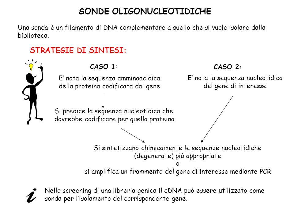 SONDE OLIGONUCLEOTIDICHE