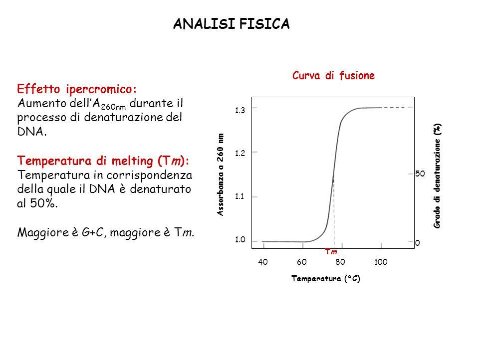 ANALISI FISICA Effetto ipercromico: