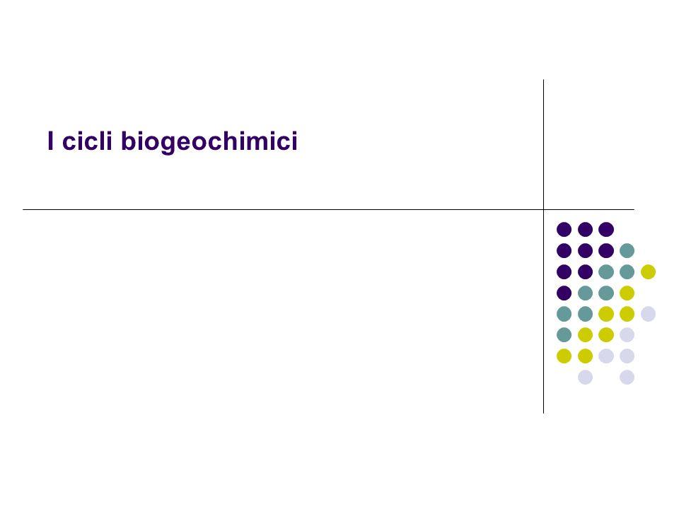 I cicli biogeochimici