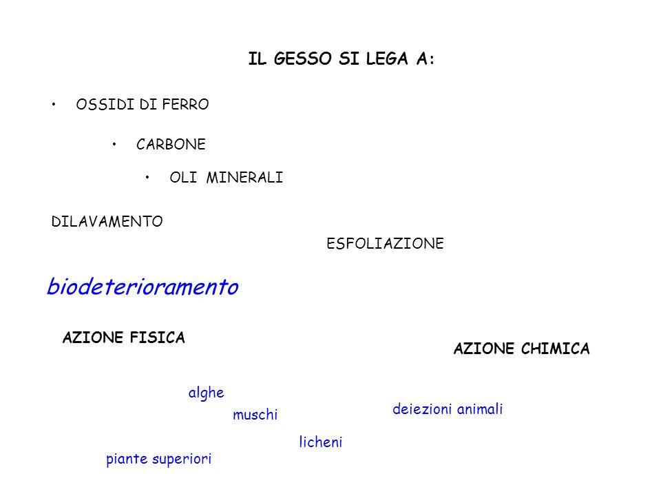 biodeterioramento IL GESSO SI LEGA A: OSSIDI DI FERRO CARBONE