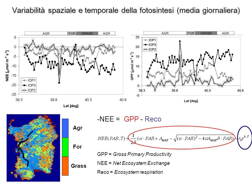 Variabilità spaziale e temporale della fotosintesi (media giornaliera)