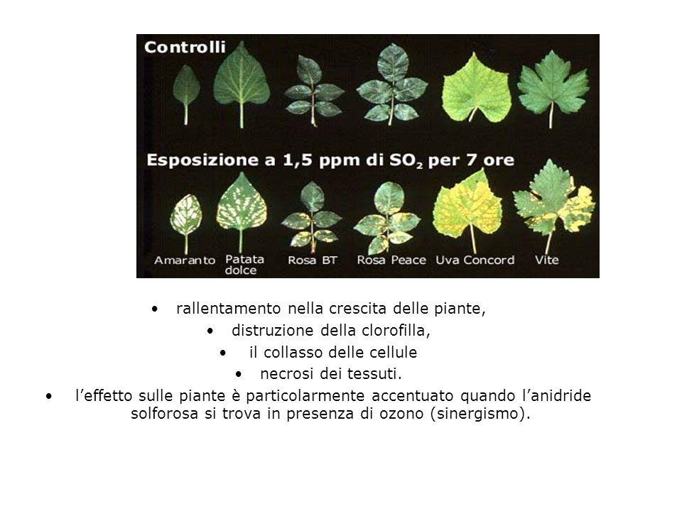 rallentamento nella crescita delle piante,