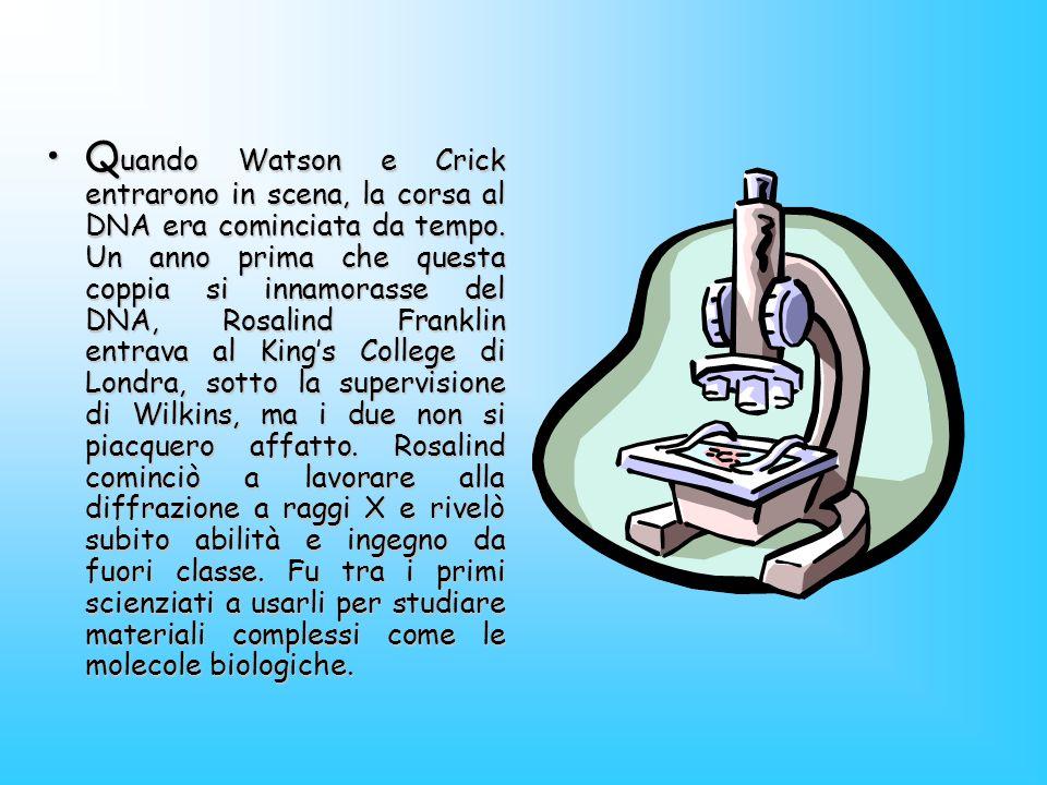 Quando Watson e Crick entrarono in scena, la corsa al DNA era cominciata da tempo.