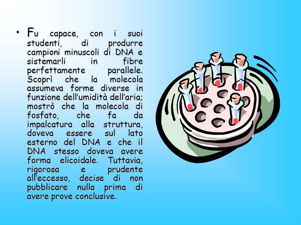 Fu capace, con i suoi studenti, di produrre campioni minuscoli di DNA e sistemarli in fibre perfettamente parallele.