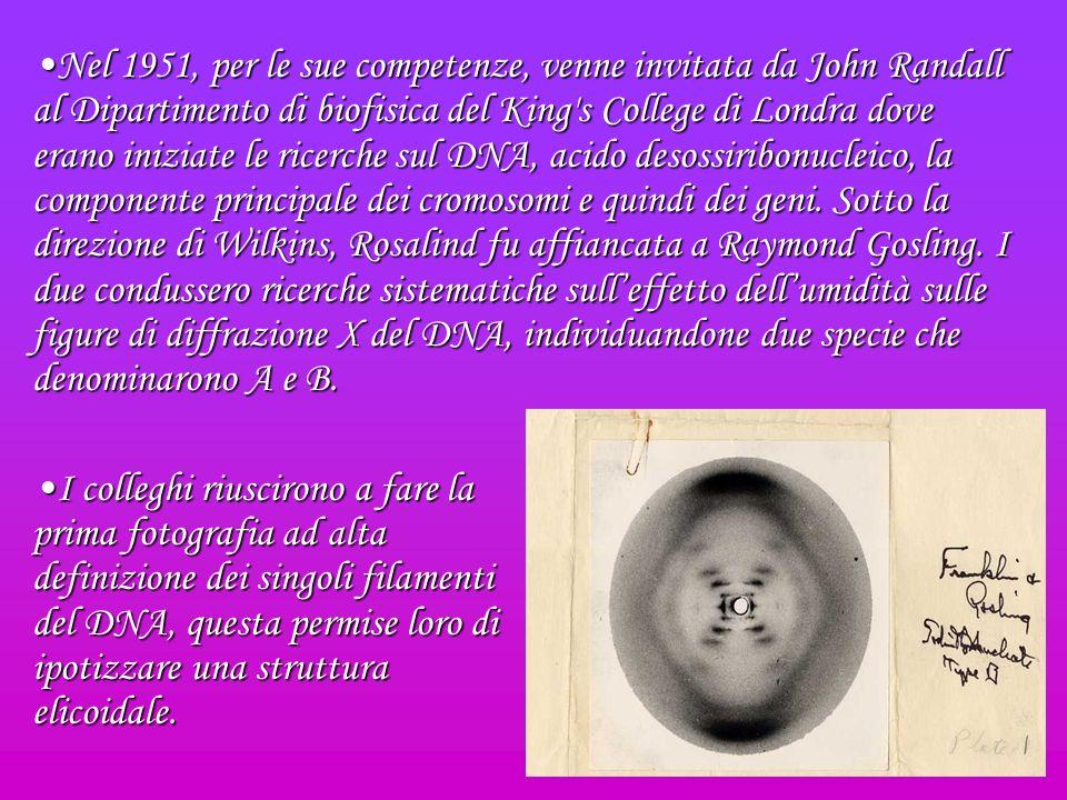 Nel 1951, per le sue competenze, venne invitata da John Randall al Dipartimento di biofisica del King s College di Londra dove erano iniziate le ricerche sul DNA, acido desossiribonucleico, la componente principale dei cromosomi e quindi dei geni. Sotto la direzione di Wilkins, Rosalind fu affiancata a Raymond Gosling. I due condussero ricerche sistematiche sull'effetto dell'umidità sulle figure di diffrazione X del DNA, individuandone due specie che denominarono A e B.