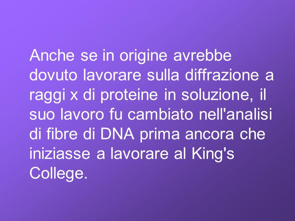 Anche se in origine avrebbe dovuto lavorare sulla diffrazione a raggi x di proteine in soluzione, il suo lavoro fu cambiato nell analisi di fibre di DNA prima ancora che iniziasse a lavorare al King s College.