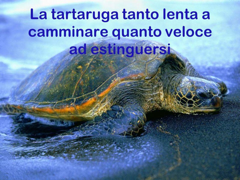 La tartaruga tanto lenta a camminare quanto veloce ad estinguersi
