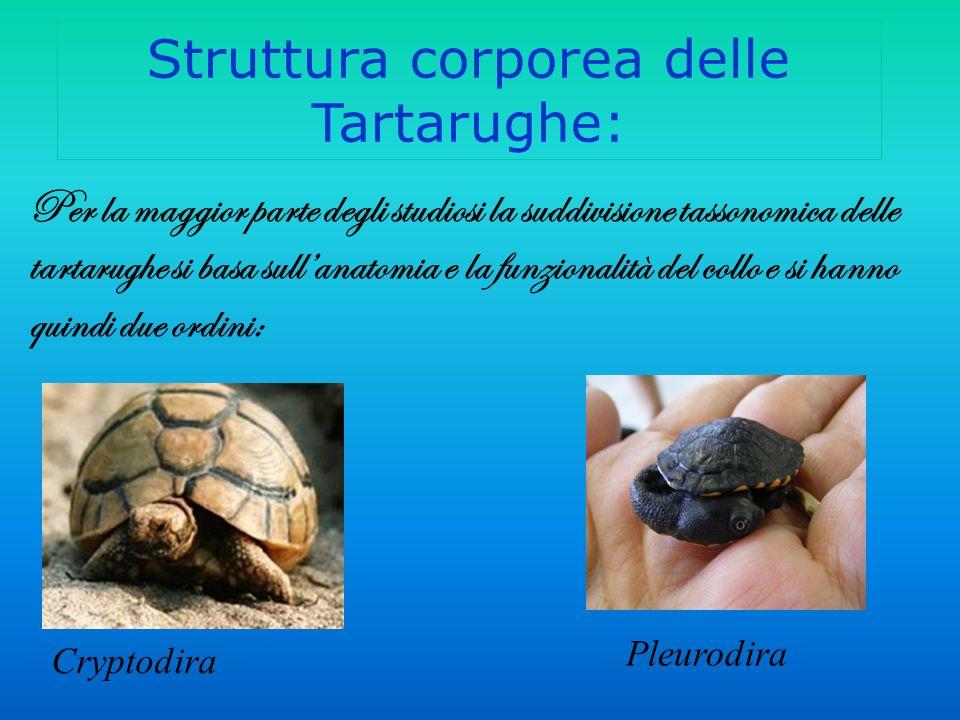 Struttura corporea delle Tartarughe: