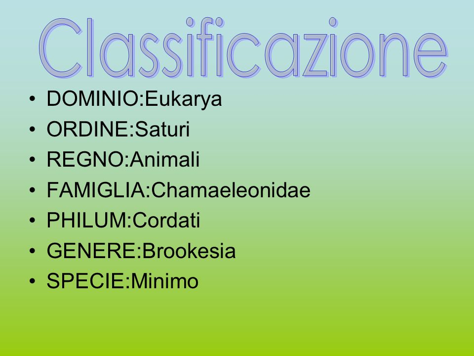 Classificazione DOMINIO:Eukarya ORDINE:Saturi REGNO:Animali