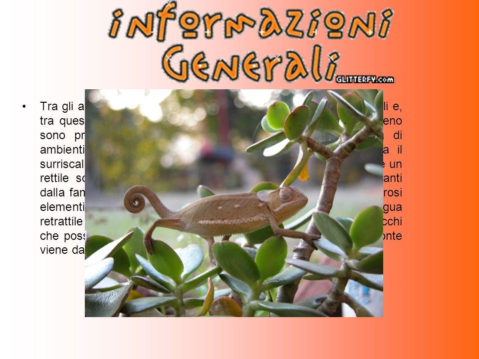 Tra gli animali del Madagascar in via d'estinzione vi sono i rettili e, tra quest' ultimi, vi è il camaleonte.