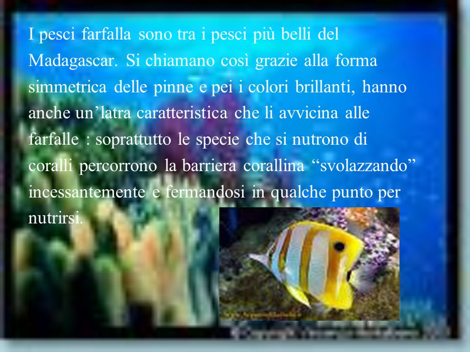 I pesci farfalla sono tra i pesci più belli del