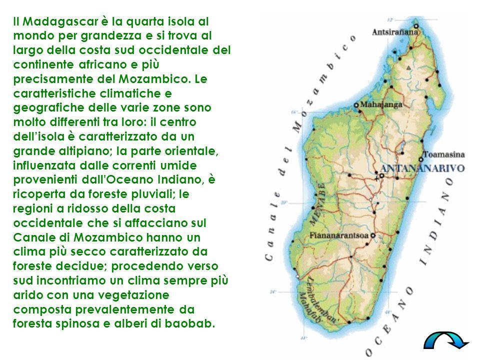 Il Madagascar è la quarta isola al mondo per grandezza e si trova al largo della costa sud occidentale del continente africano e più precisamente del Mozambico.