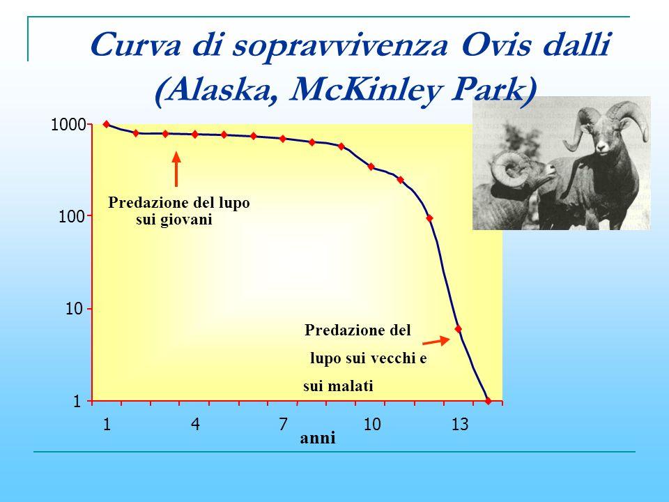 Curva di sopravvivenza Ovis dalli (Alaska, McKinley Park)