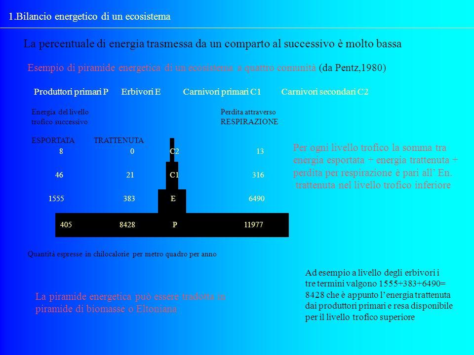 1.Bilancio energetico di un ecosistema
