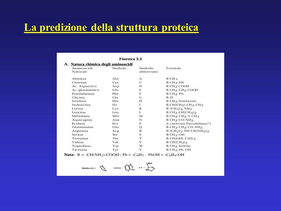 La predizione della struttura proteica