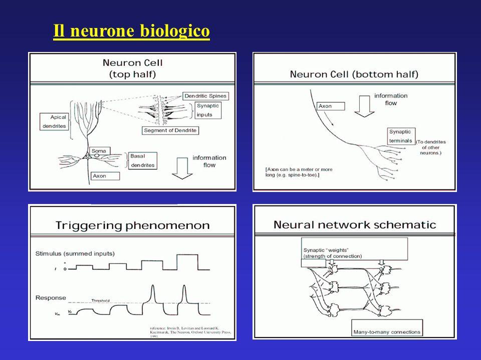 Il neurone biologico