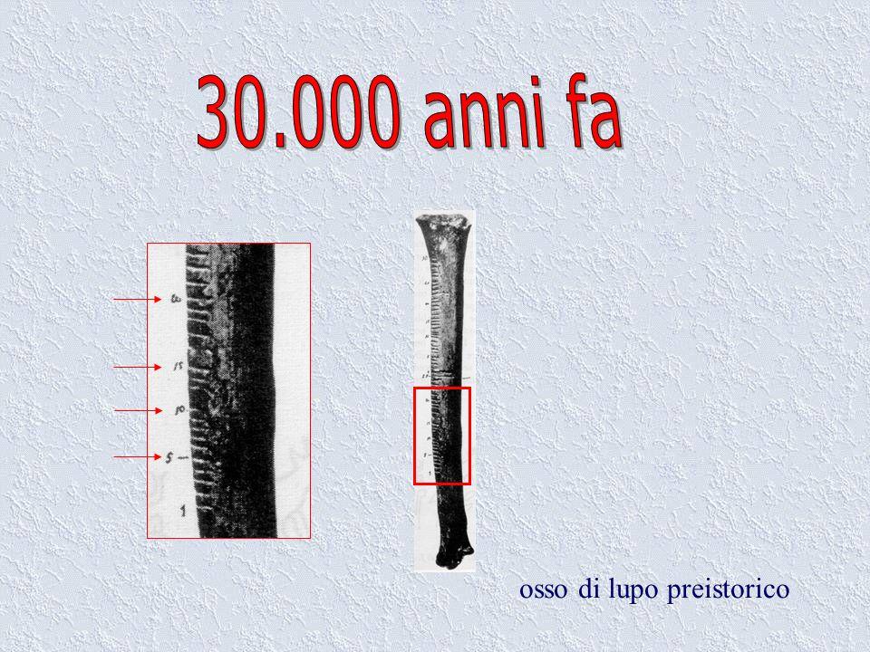 30.000 anni fa osso di lupo preistorico