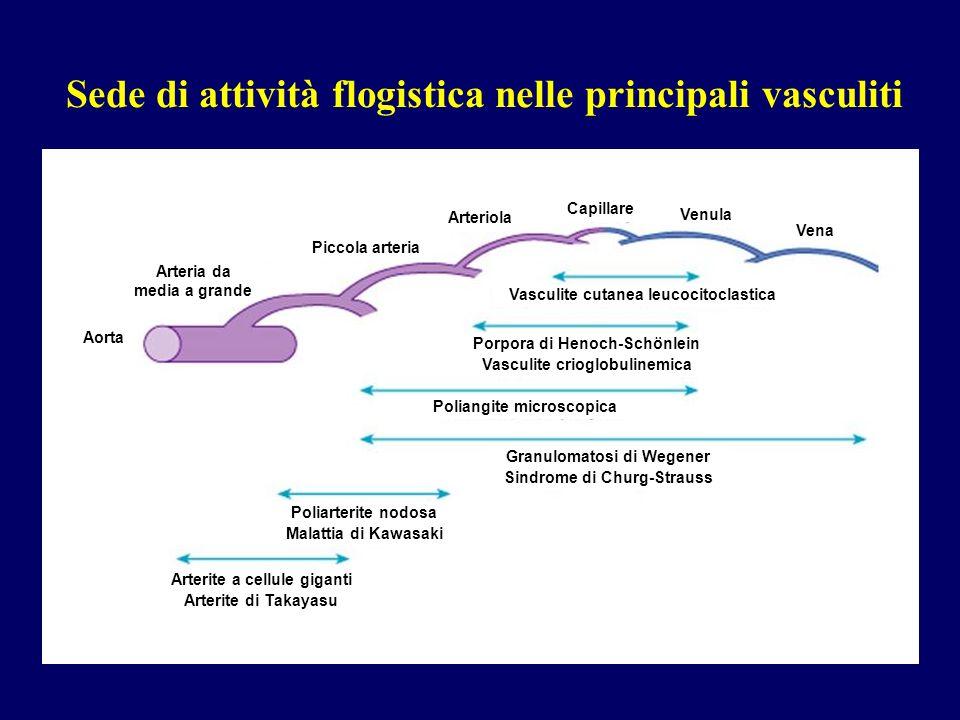 Sede di attività flogistica nelle principali vasculiti