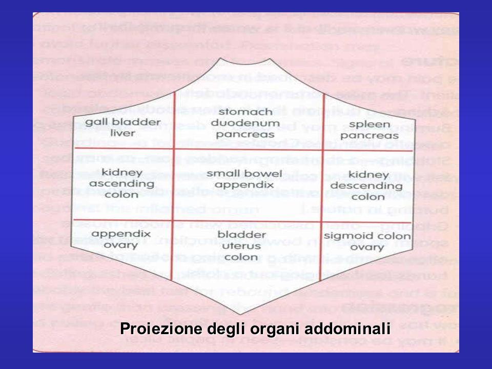 Proiezione degli organi addominali