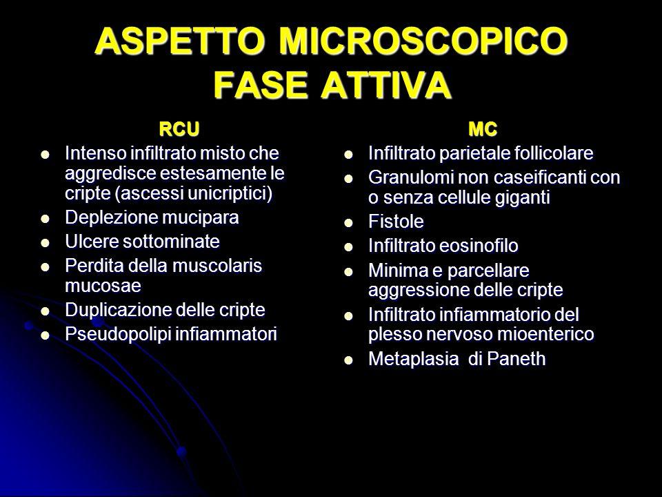 ASPETTO MICROSCOPICO FASE ATTIVA