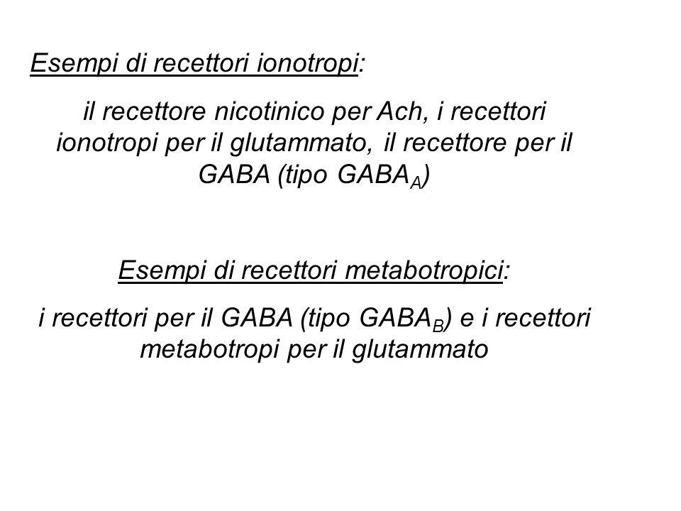 Esempi di recettori metabotropici: