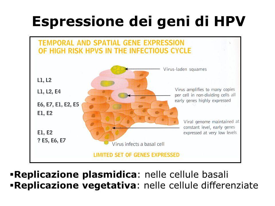 Espressione dei geni di HPV