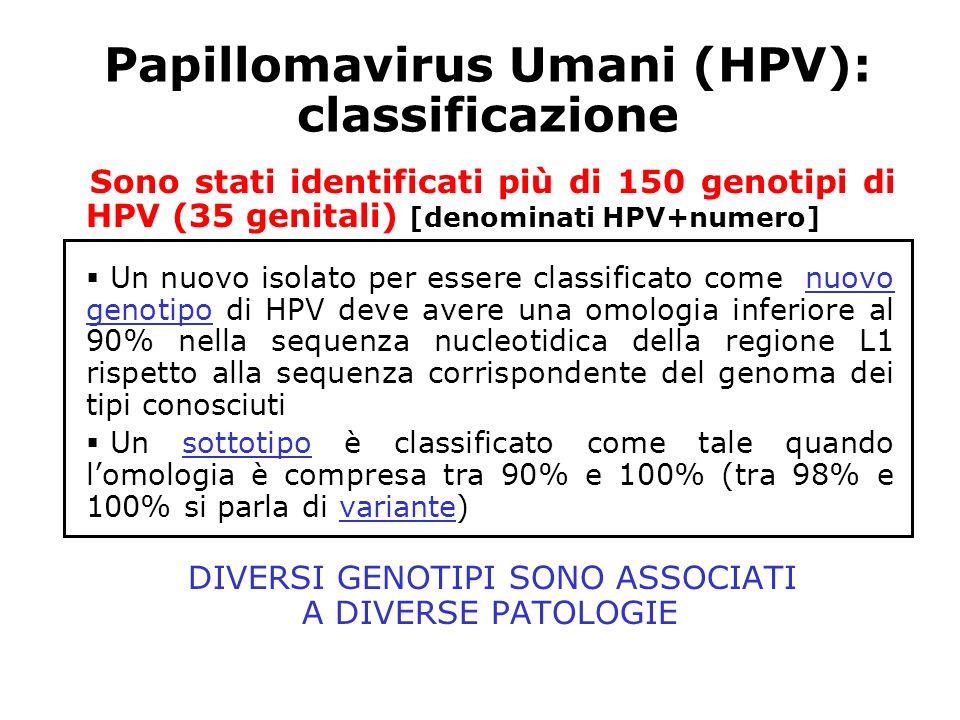 Papillomavirus Umani (HPV): classificazione