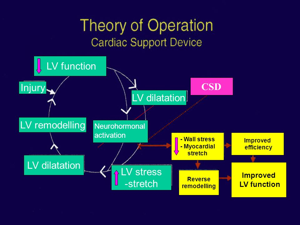 LV function Cardiac function CSD Injury LV dilatation LV dilatation