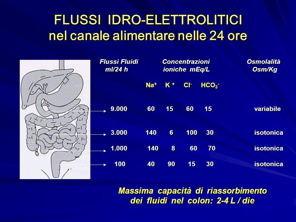 FLUSSI IDRO-ELETTROLITICI nel canale alimentare nelle 24 ore