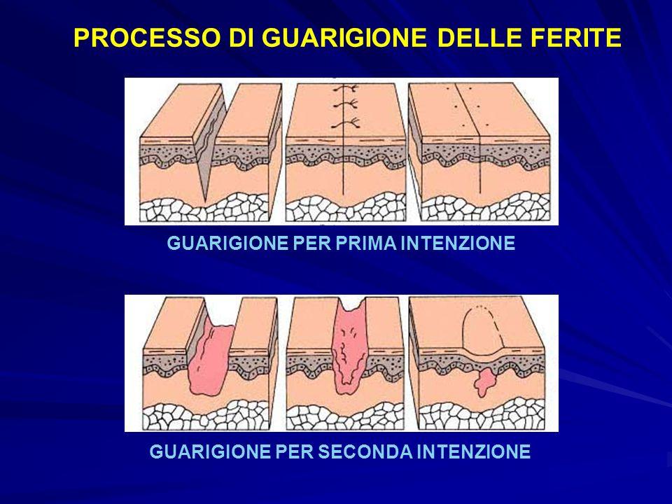PROCESSO DI GUARIGIONE DELLE FERITE