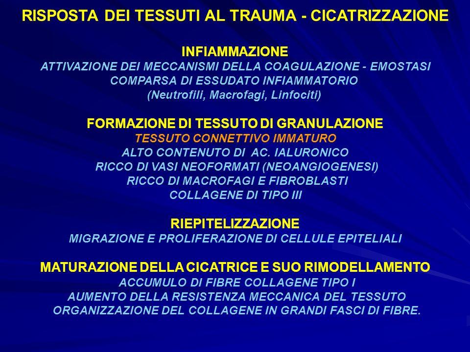 RISPOSTA DEI TESSUTI AL TRAUMA - CICATRIZZAZIONE